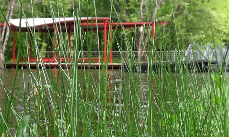 mill-race-park-columbus-in-grasses