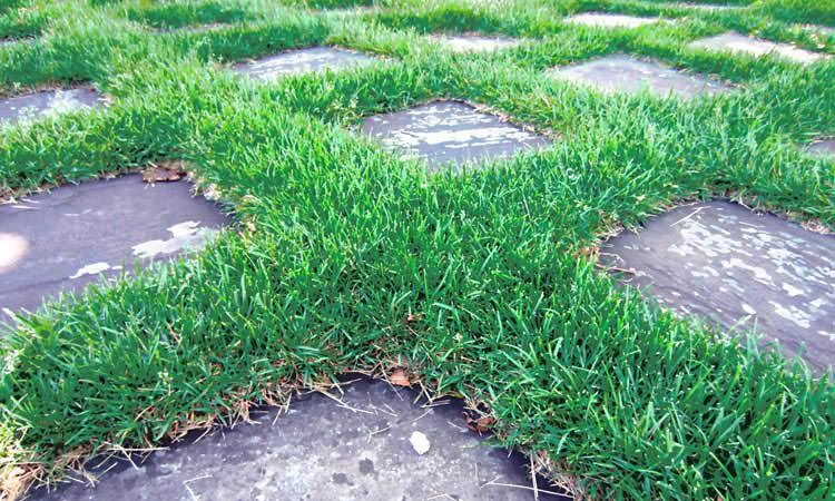 grass-at-cummins-headquarters-columbus-indiana