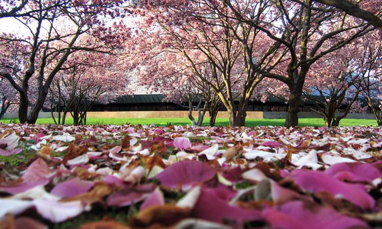 north-christian-columbus-in-magnolia-petals