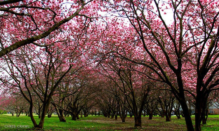 north-christian-columbus-in-magnolias