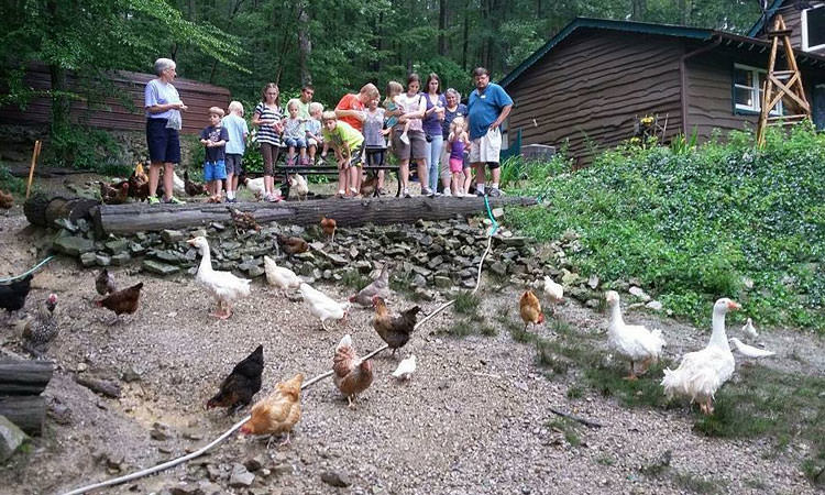 Country Chalet petting zoo - Columbus