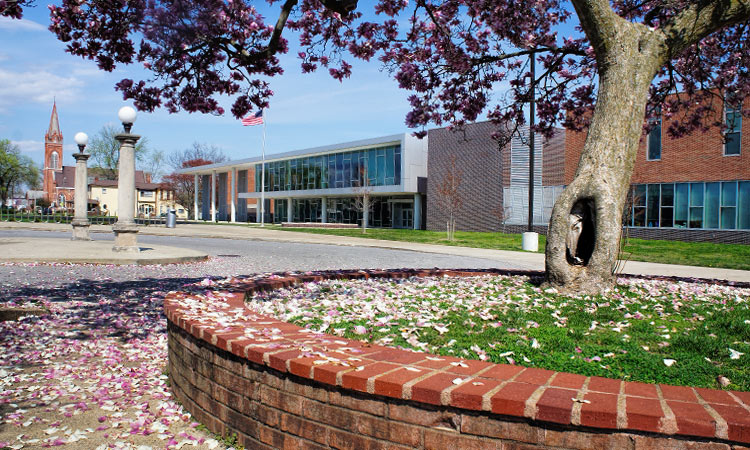 Magnolia trees at Central Middle School - Columbus, Indiana