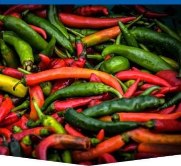 red-chilis